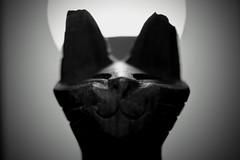 Chaos God (matthileo) Tags: tabletop still stilllife tabletopphotography bw blackandwhite blackwhite cat statue catstatue macro light backlight backlit wood wooden owo uwu nwn smile grin abstract tumblr twitter