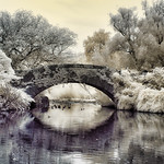 Central Park NY in Infrared thumbnail
