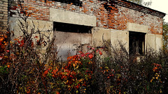 povarovo_19 (Sergei_41) Tags: россия осень дом здание autumn autumnweather autumncolors brick wall wallporn walls brickwall building abandonedbuilding house decay beautyindecay forgotten grass window abandoned abandonedearth abandonedplaces abandonedexcellence abandonedworld abandonedhouse mobilephoto s7 samsunggalaxy smartphone urbex urbexapocalypse urbxtreme urbexplaces russia russianphoto russianpics russian russianstyle ruralexploration rurex ruins ruin russianreality rust red