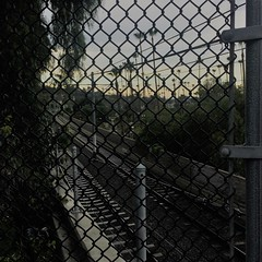 Matrix Visited (Rand Luv'n Life) Tags: odc our daily challenge angular matrix lines rail tracks poles chain link fence multiple palm trees tree branch
