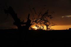 tramonto sulle collina - Pianello di ostra (walterino1962 / sempre nomadi) Tags: albero rami foglie sole nubi nuvole collina pendiio vegetazione alberi arbusti erba luci ombre riflessi pianellodiostra ancona