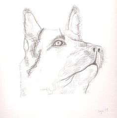013 (step_into_the_night) Tags: sketch sketchbook sketches drawings illustration pencil graphite 2b 4b 12b 10b 8b 7b 6b 5b class project quick art artwork black grey white 2019 practice learning hb animal pets domestic portrait depiction representation image study portrayal face head dog german shepherd adult crosshatch cross hatch crosshatching progress linework line work noble