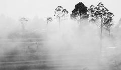 Misty morning (Luke I) Tags: malang batu mist indonesia black white bw