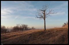 Roz 2019 (5) (***RM***) Tags: czechrepublic moravia zidlochovice country nature walk winter february nikon d850 nikkor 2470mm
