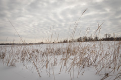 (Brett Whaley) Tags: 2019 canoneos77d crowhassanparkreserve february winter wrightcounty minnesota snow