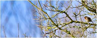 Le printemps arrive…