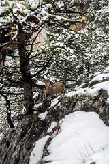 0096_DSC_2684 (marcellszmandray) Tags: ausztria hohewand gutensteinialpok alpok viaferrata kirándulás tavasz hó