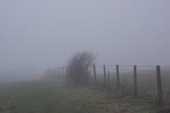 Fogbound (Shastajak) Tags: fence fog fencefriday