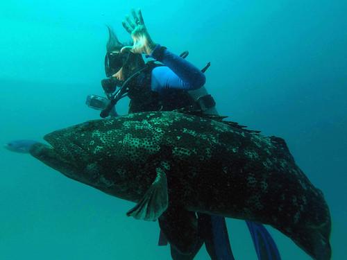 GOPR1165 Big Fish!!