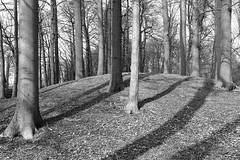 . (just.Luc) Tags: trees wood bos wald forêt forest bomen arbres bn nb zw monochroom monotone monochrome bw puurs kleinbrabant nature natuur vlaanderen flandres flanders belgië belgien belgique belgium belgica shadows schaduw ombres schatten bäume