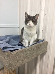 Misty Moon - 6 year old spayed female