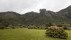 Kirstenbosch National Botanic Gardens (Hernan Linetzky Mc-Manus) Tags: capetown southafrica wild linetzky ciudaddelcabo