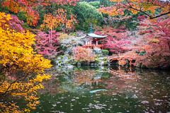 Lost (johnshlau) Tags: lost pond daigojitemple bendentohall daigoji 醍醐寺 buddhisttemple buddhist temple garden autumncolors autumn colors redleaves red leaves trees kyoto japan zen serene calm peaceful reflections water