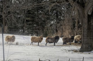 Lining Up For Breakfast-HFF!