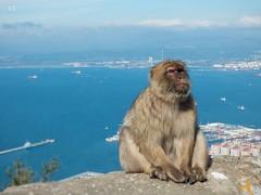Gibraltar monkey (lauracastillo5) Tags: monkey animals animal gibraltar sea seascape blue beach sky outdoors landscape city cityscape travel nature natural