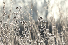 winter flowers (photos4dreams) Tags: photos4dreams p4d photos4dreamz blue sky blauer himmel kalt cold sun trees bäume landschaft ice bach stream gersprenz sunday biking winter fahrradfahren landscape canoneos5dmark3