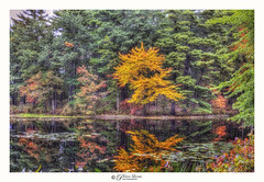 Standing out in the crowd (Pearce Levrais Photography) Tags: pond lake water reflection autumnal autumn foilage canon hdr landscape outside outdoor nature explore nh newhampshire plant lilipad