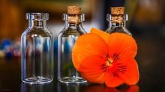 Bottles - 6544 (ΨᗩSᗰIᘉᗴ HᗴᘉS +50 000 000 thx) Tags: trois three trio bottle glass cristal flora flower belgium europa aaa namuroise look photo friends be yasminehens interest eu fr party greatphotographers lanamuroise flickering orange bokeh