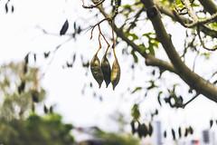 Leafy (Leighton Wallis) Tags: sony alpha a7r mirrorless ilce7r 55mm f18 emount 1635mm f40 brisbane qld queensland australia newfarm