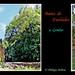 Bains de Fasilades © Gondar