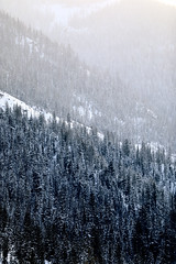 Snowy Mountainside (wyojones) Tags: wyoming cody scenery yellowstonehighway absarokamountains shoshonenationalforest trees snow fog mist clouds mountain mountainside pahaskatepee lodgepolepine winter wyojones mp np