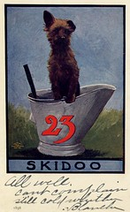 23 Skidoo—Dog in Coal Bucket (Alan Mays) Tags: ephemera postcards paper printed 23skidoo 23skiddoo 23skiddo skidoo23 skiddoo23 skiddo23 23 twentythree skidoo skiddoo skiddo catchphrases fads scram beatit dogs animals coalbuckets buckets humor humorous funny comic amusing illustrations red blue 1907 1900s antique old vintage typefaces type typography fonts eves estellaeves photographers williamsport pa lycomingcounty pennsylvania ullman ullmanmanufacturingcompany postcardpublishers newyorkcity ny newyork catanddogseries seriesno71 postcardseries