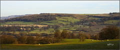 Hillside Panorama... (Picture post.) Tags: landscape nature green panorama buildings hills fields countryside trees shadows sheep paysage arbre castle farms houses winter