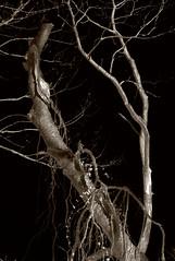 Just Some Trees 3 (EssGee Photography™) Tags: forttilden lumixdcfz80 newyork travel tourist ny gatewaynationalrecreationarea wood digital tree