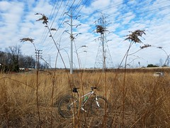 2019 Bike 180: Day 13 - In the No-Mow Zone (mcfeelion) Tags: cycling bike bicycle bike180 2019bike180 annandaleva americanapark crosscountytrail