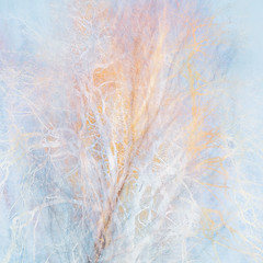 46/365 (Jane Simmonds) Tags: abstract birchtree forestofdean iphone multipleexposure tree woodland impressionist 3652019