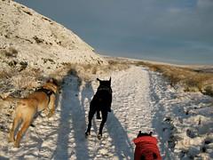 IMG_9662 (christy.hunter) Tags: dogs labrador staffie landscape charge shadow action wessenden reservoir kirklees