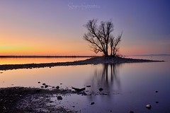 Lone Tree (Schneidersphotography) Tags: tree baum bäume trees see lake lakescape sonnenuntergang sunset wasser water evening abend abends abendstimmung longexposure lowlight langzeitbelichtung landscape landschaft landscapephotography landschaftsfotografie austria österreich nikon nikonflickraward ngc outdoorlife outdoor outdoors colours colourful winter nikkor weather wolkenlos abendrot europe europa outside nature light natur