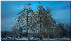 FEBRUARY 2016  NM1_8122_007904-1-222 (Nick and Karen Munroe) Tags: snow snowfall snowstorm snowy wintry winter fog foggy winterfog winterwonderland mist misty fogpatches karenick23 karenick karenandnickmunroe karenandnick munroe karenmunroe karen nickandkaren nickandkarenmunroe nick nickmunroe munroenick munroedesigns photography munroephotoghrpahy munroedesignsphotography nature landscape brampton bramptonontario ontario ontariocanada outdoors canada d750 nikond750 nikon colour colours color colors nikon70200f28 nikon70200 f28 nikonf28 70200 70200f28