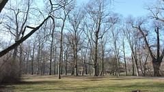 2019-02-16 February in Chateau Garden 1 (beranekp) Tags: czech teplice teplitz chateau garden garten tree baum