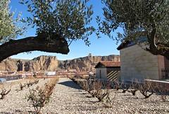 Enmarcando el pueblo (kirru11) Tags: paisaje vistas castillo pueblo iglesia casas montaña roca árboles viñas pcielo quel larioja españa kirru11 anaechebarria canonpowershot olivos