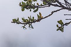 Baquiano Trail. Pacifica, CA. (j1985w) Tags: california pacifica sweeneyridge raindrops plants sky clouds