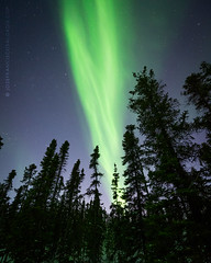 Lights in the Boreal Forest (josefrancisco.salgado) Tags: 1424mmf28g borealissciencephototour canada d4 nikkor nikon northernlights northwestterritories winter yellowknife astrofotografía astronomy astronomía astrophotography aurora auroraborealis aurorae auroras borealforest bosque bosqueboreal cielonocturno estrellas flora forest invierno night nightsky stars woods ca