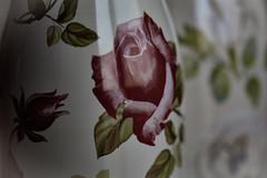 Nunca me regala flores, pero me colma de bellos recuerdos; esos no los marchita el tiempo. (elena m.d.) Tags: new nikon d5600 sigma sigma105