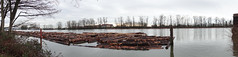 North Arm of the Fraser River (D70) Tags: north arm fraser river 009365 panorama log boom anchored pilings winter day between rain showers move ocean riverdistrict vancouver britishcolumbia canada pacific