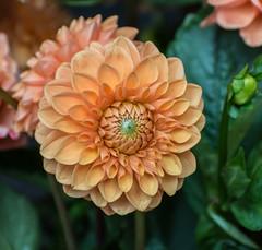 Un-do Winter Depression. (Omygodtom) Tags: contrast composition colorful coth5 flower flickr tamron90mm tamron texture nature nikon nikkor d7100 digital dof bokeh