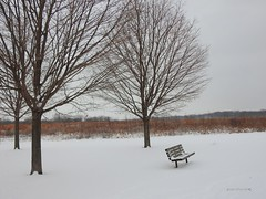 Snow Day (Anton Shomali - Thank you for over 2 million views) Tags: portrait sky art beauty bench clouds il ill illinois bradley perryfarm field grass trees beautiful seasonal season winter cold white landscape tree chair seat day snow snowday thelonelybench