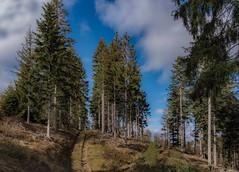 Forstweg (Toledo 22) Tags: wanderweg berg fichten waldweg münstertal blackforest landschaft blau himmel bäume schwarzwald forstwald tanne baum wald