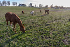 Horse country (sniggie) Tags: fayettecounty keeneland kentucky lexington manchesterfarm horse horsestable thoroughbredhorse