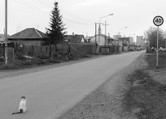 Cat's life perspective (man_from_siberia) Tags: cat road street kemerovo siberia spring april monochrome blackandwhite blackwhite perspective canon eos 5d dslr canoneos5d canon5d canon5dclassic canon5dmk1 50mm canonef50mmf18ii fullframe кемерово