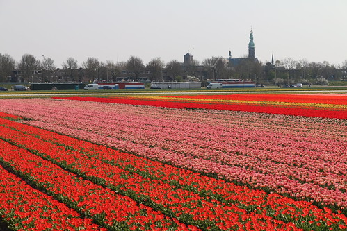 Flowerfield Lisse, Holland