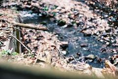ME73922_0235_24 (pointshootdevelop) Tags: canon ae1program ae1 film 35mm photography filmisnotdead 50mm 50mm18 fujifilm fujisuperia400 cars automotive classic antique toyota land cruiser