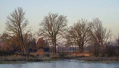 _IMG4416 (Hendricus M. de Regt) Tags: the netherlands gelderland natuur nature landscape grass bos forest trees zonsopkomst sunset swamp nederland veluwe landschap gras water bomen moeras