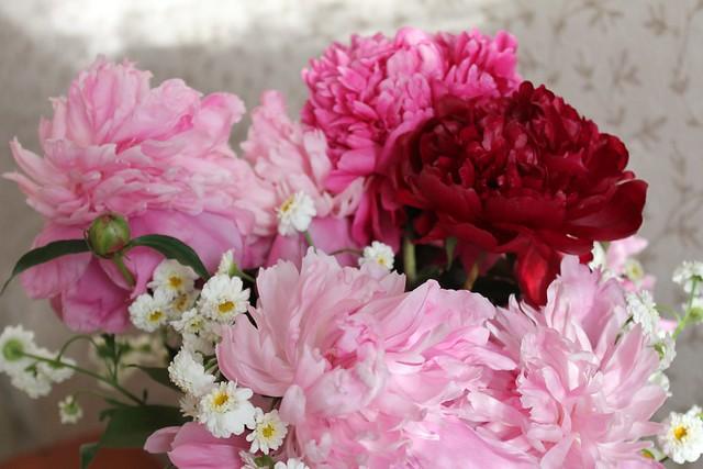 Обои цветы, букет, весна, розовые цветы, пионы картинки на рабочий стол, раздел цветы - скачать