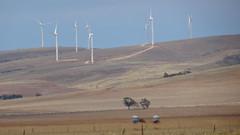 0420 Windfarm, Redhill (Crystal Brook) (roving_spirits) Tags: australia australien australie southaustralia