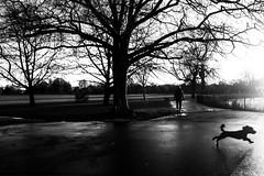 ** (donvucl) Tags: london clissoldpark figure dog lightandshade shadows landscape trees bw blackandwhite fujixt3 donvucl